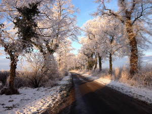 Frost glistening on the branches on the trees on the lane